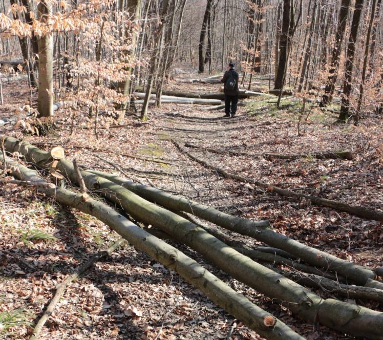73 Abschneider Serpentinenstraße Holzbarrieren 2