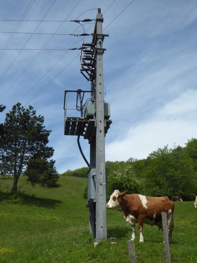 13 Kuh mit Strom