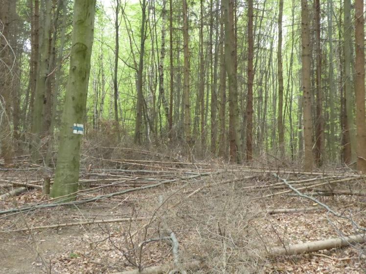 29 Wanderweg im Holzfällerchaos 1