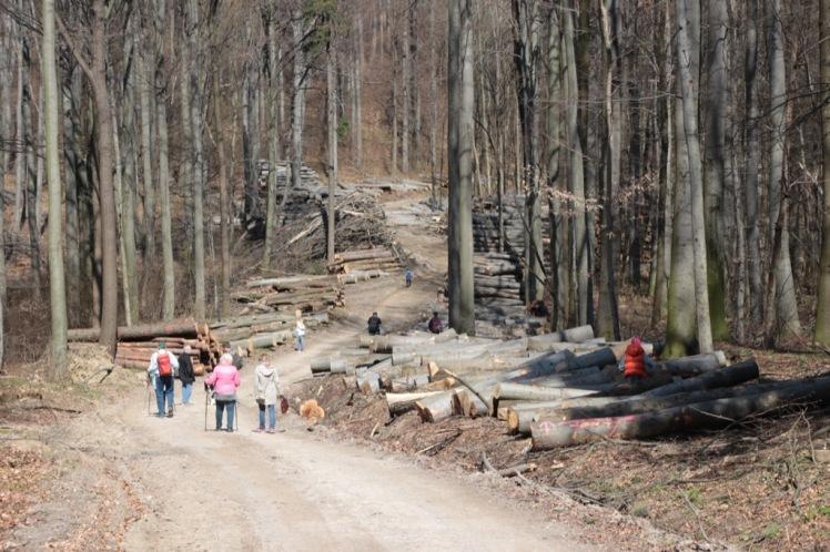 44 Eichenhain bis Windischhütte zerstört 4
