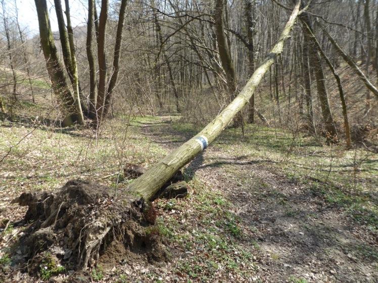 47 Abstieg von Haselbacher Straße gestürzte Markierung