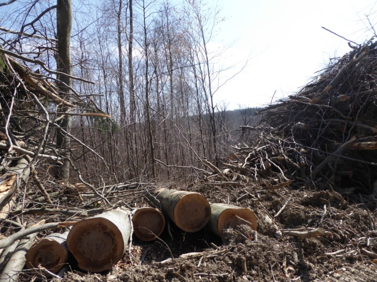 53 Eichenhain bis Windischhütte zerstört 2