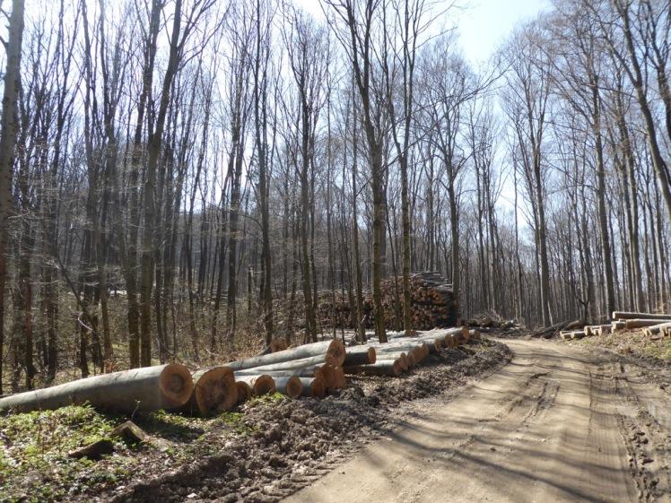 57 Eichenhain bis Windischhütte zerstört 6