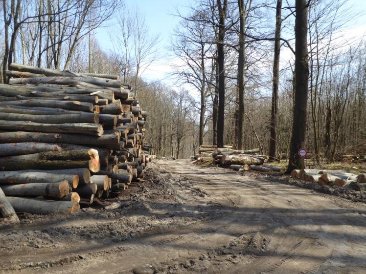 60 Eichenhain bis Windischhütte zerstört 9