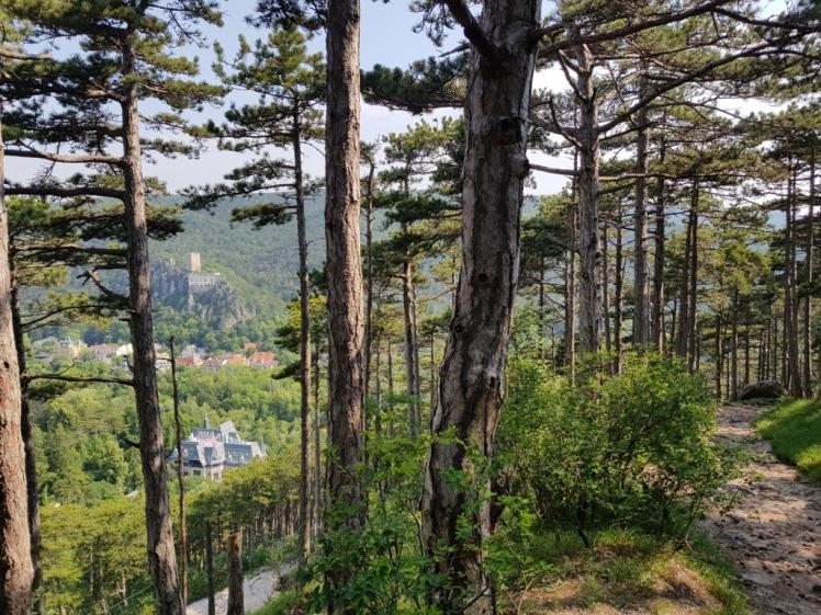 04 Blick vom Rauheneck-Aufstieg auf Rauhenstein 4