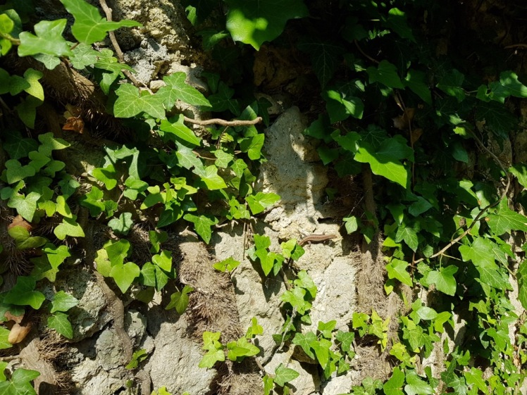 17 Ruine Rauheneck Impressionen 3