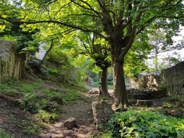 33 Ruine Rauheneck Impressionen 19