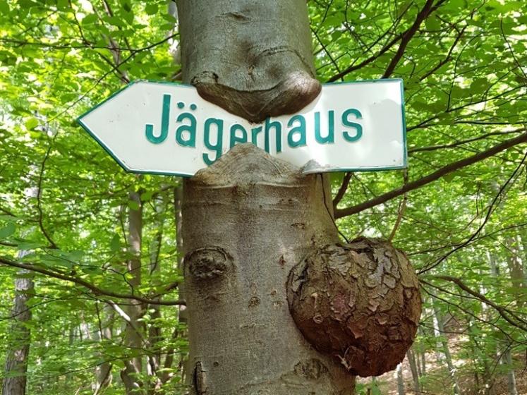 62-jacc88gerhaus-pfeil-im-baum.jpg