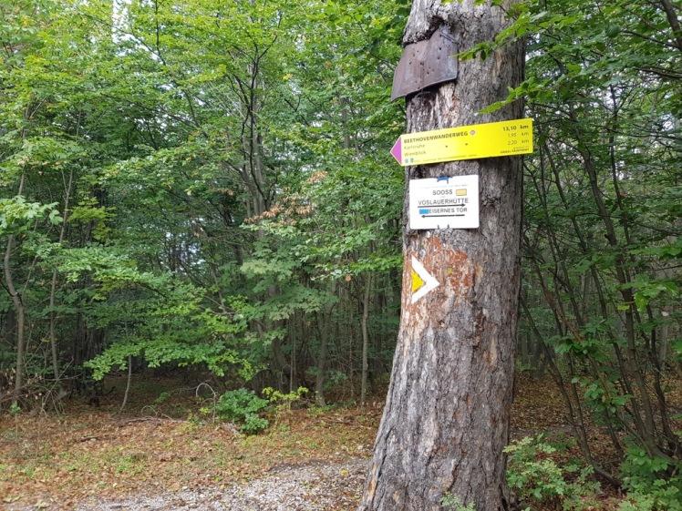35 Baum Abzweigung Baden verwirrende Markierungen 1