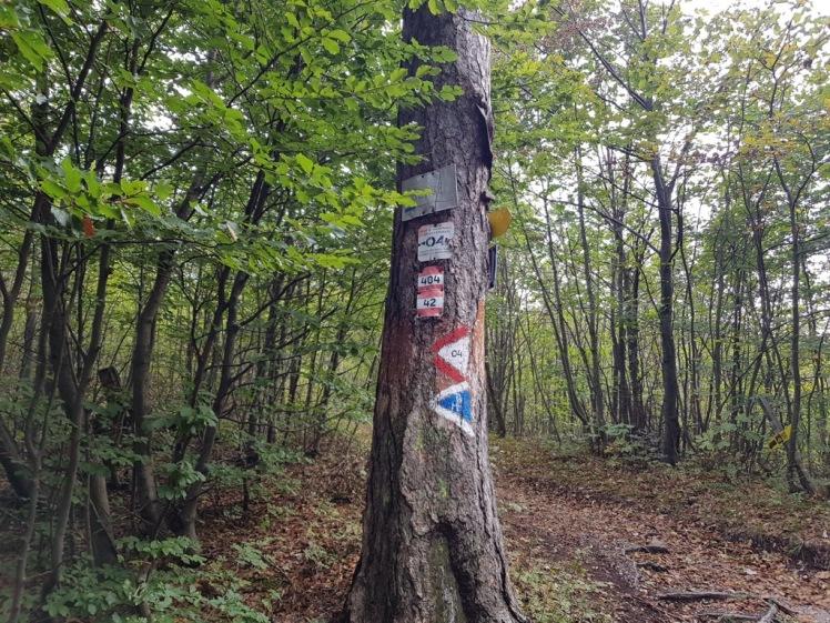 40 Baum Abzweigung Baden verwirrende Markierungen 6