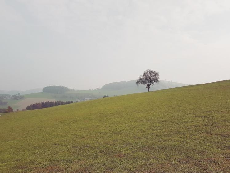 10A Einzelbaum vor Fernblick Instagram