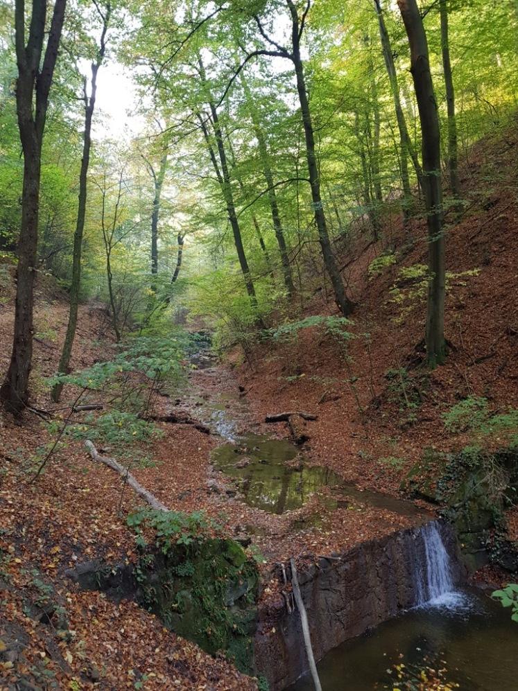 17 Hagenbachklamm Herbstimpressionen 5