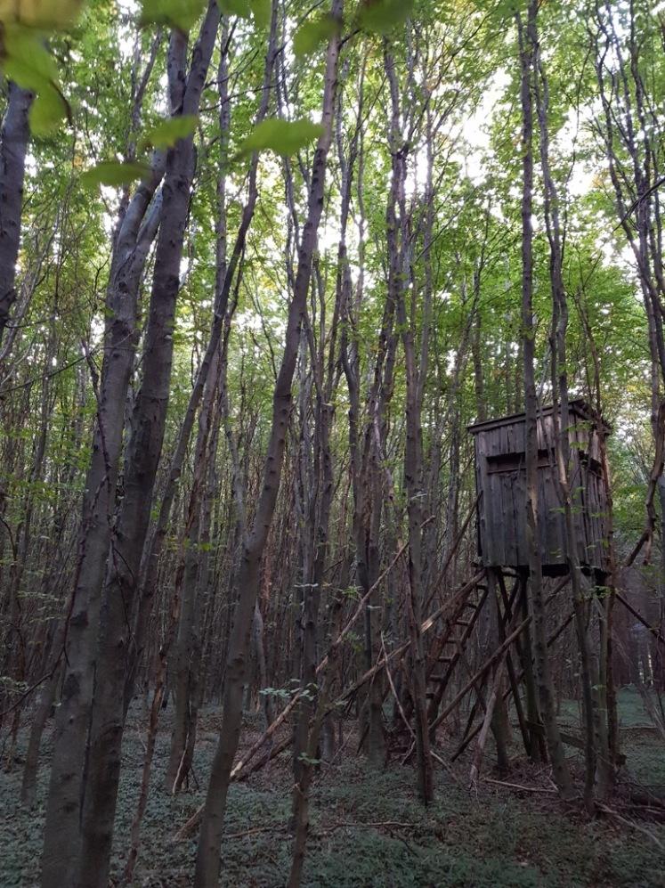 26 Waldstück nach Allhang 1