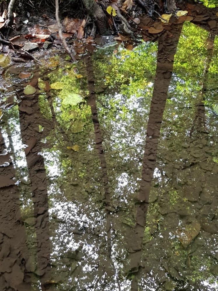 32 Waldspiegelung in Lacke