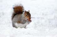 squirrel-17854_1280
