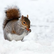 squirrel-17854_1280