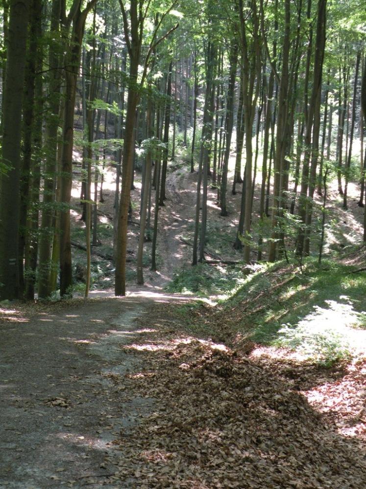 12 Weg und Aufstieg zum Troppberg 5