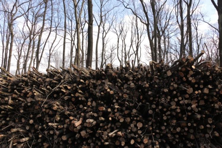38 Holzstoß, dahinter Tiergartenbäume.JPG
