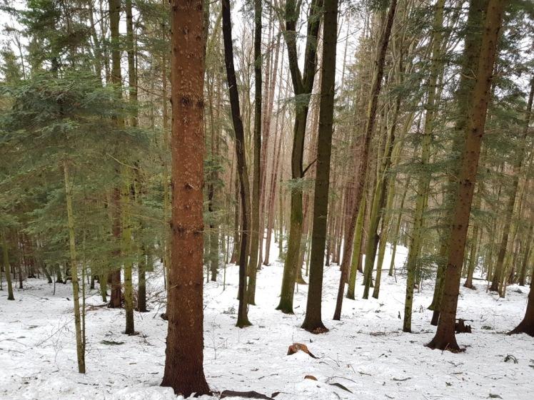 23 winterwald über michelbach
