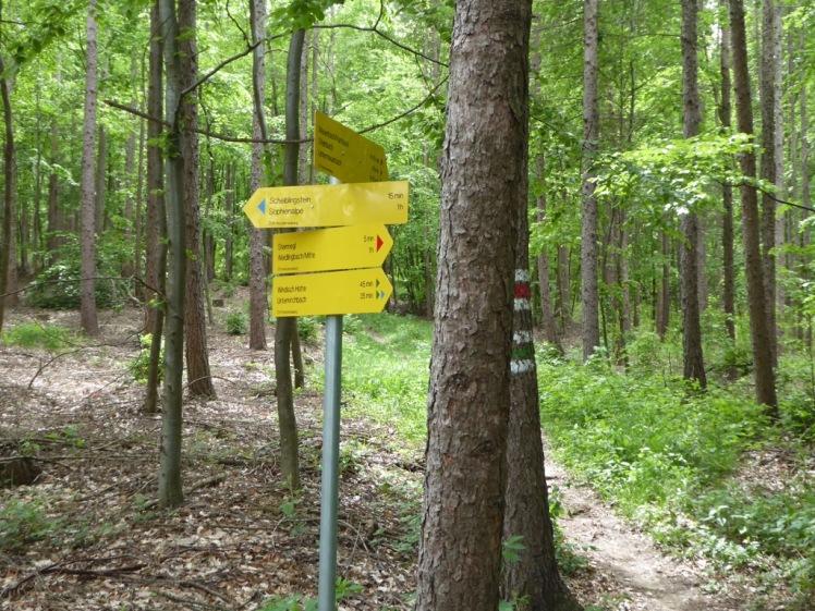 21 neue Abzweigung im Wald nach Steinriegl