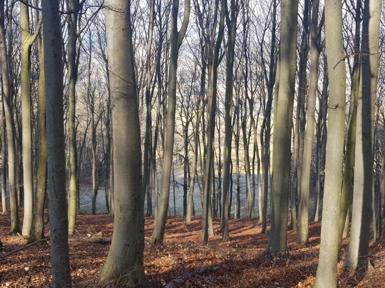 05 Wald beim Weg nach Haag