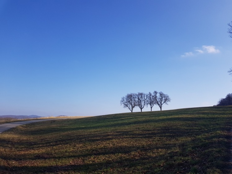 13 3 Bäume_Kreuzung nach Erlaa-Siedlung 1