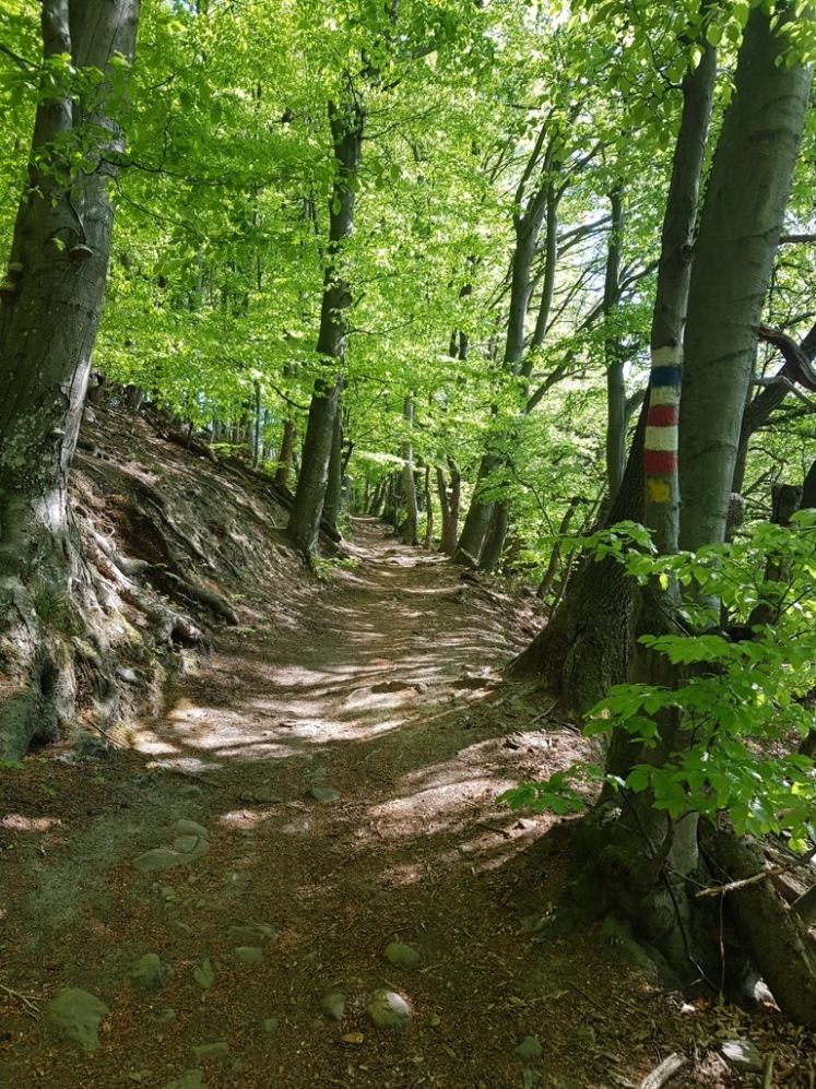 07 Aufstieg zur Troppberg-Kreuzung