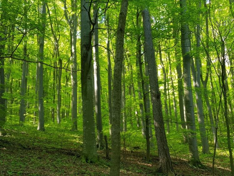 08 Wald Aufstieg zur Seewiese
